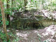 Forêt près des ruines et pyramide de Muyil (près de Tulum au Mexique)