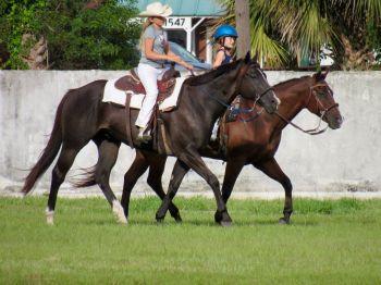 Cavalières à Davie en Floride