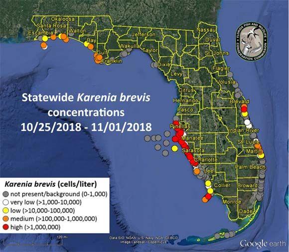 marée rouge en novembre en Floride