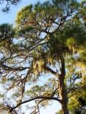 Cedar Point Park à Englewood en Floride