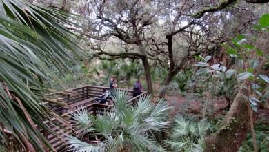 Photo de Delray Oaks : un très beau petit parc à Delray Beach