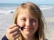 Dents de requins au Stump Pass State Park à Englewood en Floride
