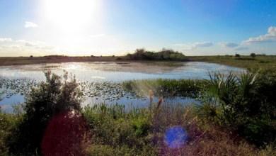 Photo of Trump alloue 200M$ contre la pollution des eaux des Everglades et des cours d'eau venant du lac Okeechobee