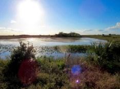 Systèmes de réservoirs dans les Everglades au Loxahatchee National Wildlife Refuge à Boynton Beach en Floride