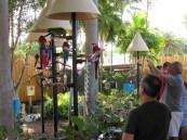 Perroquets au Miami Seaquarium