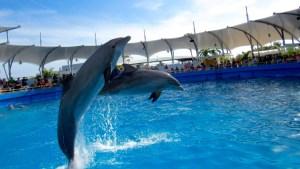 Dauphins bondissant au Miami Seaquarium
