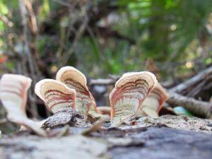 La Fern Forest à Coconut Creek en Floride