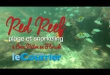 Photo de Snorkeling sur la plage de Red Reef à Boca Raton (vidéos de la Floride)