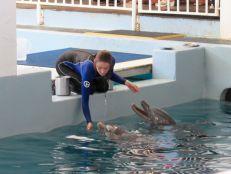 Dauphins au Clearwater Marine Aquarium