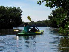 Kayak à Weedon Island et ses magnifiques tunnels de mangrove à St Petersburg en Floride