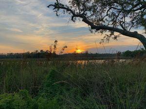 Marais de Tate's Hell à East Point en Floride