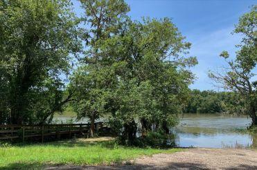 Forêt d'Apalachicola