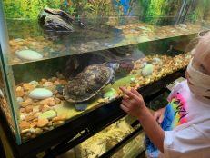 Centre de conservation des tortues à Navarre Beach