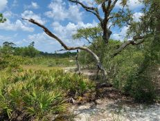 bald-point-state-park-st-mark-national-park-plage-panhandle-Floride-8410