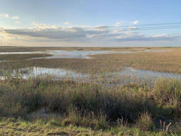 Les Everglades vus depuis la digue de Markham Park à Sunrise