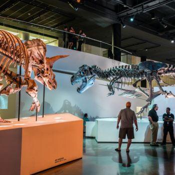 Musée des Sciences Naturelles de Houston