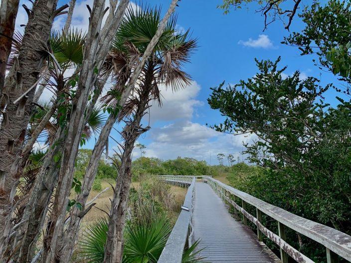 Mahogany Hammock : une île dans les Everglades