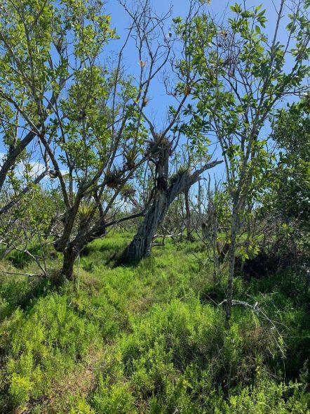 rowdy-Bend-trail-parc-national-des-Everglades-Floride-4396
