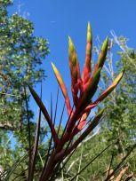 Rowdy Bend Trail, idéal pour la marche ou le VTT, près de Flamingo dans les Everglades