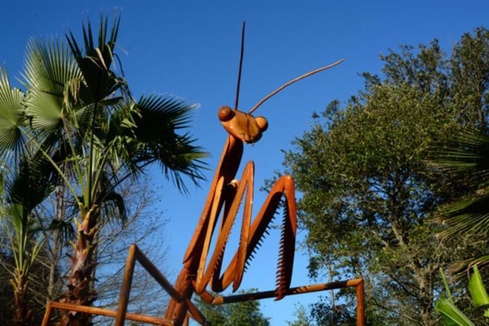 Big Bugs Invade Flamingo Gardens