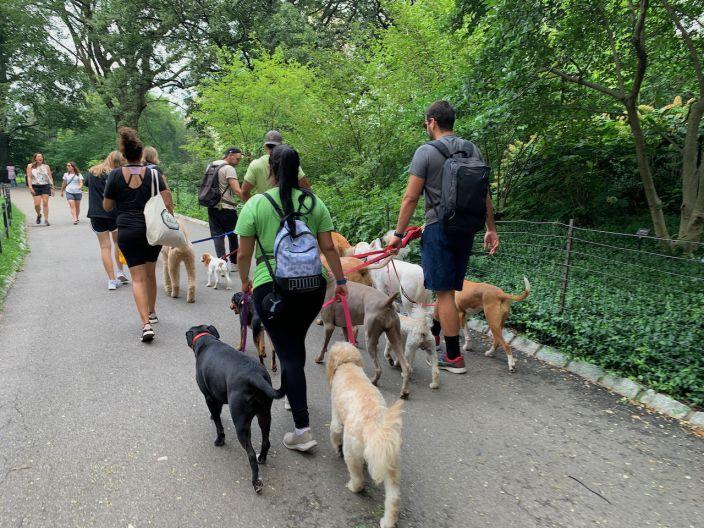 Les chiens des stars et personnes fortunées ont droit à leur promenade !