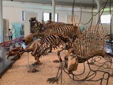 Dinosaure au Musée d'histoire naturelle de New-York (American Museum of Natural History)