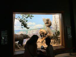 Reproduction de paysages américains au Musée d'histoire naturelle de New-York (American Museum of Natural History)
