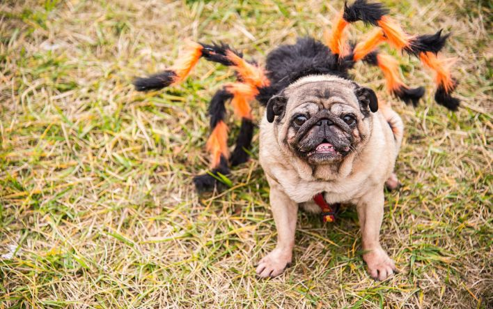 Halloween on the Mile - Coral Gables