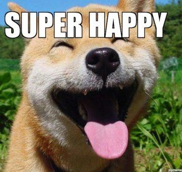 chien content