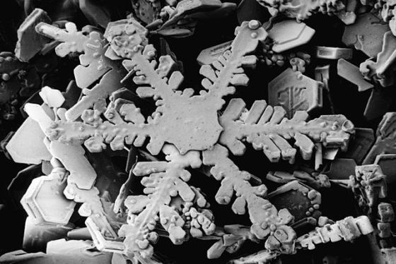 A snowflake captured by the Beltsville Electron Microscopy Unit, part of the USDA.