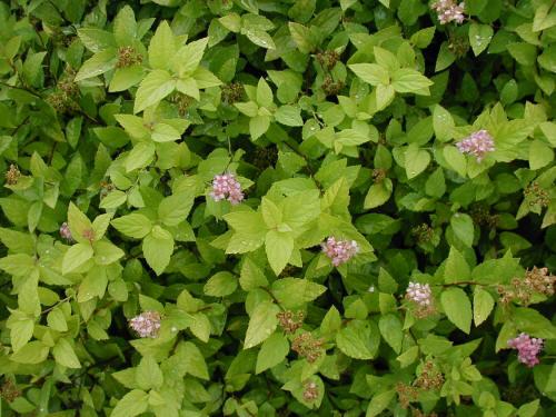 Lime Green Flowers Garden