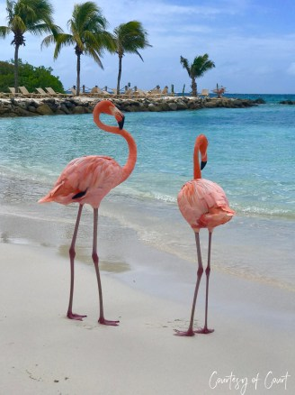 Flamingo Beach _Courtesy of Court55