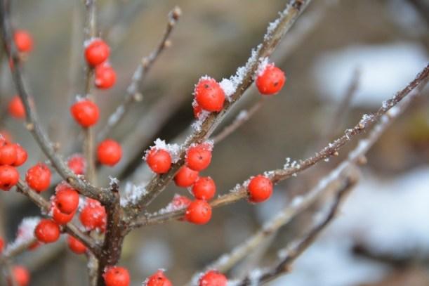 De la neige dans les Appalaches_4