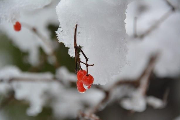 De la neige dans les Appalaches_5