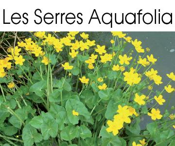 Producteur de plantes aquatiques, plantes de berge et tropicales.
