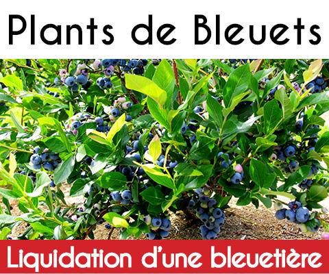 Grande vente de plants de bleuets