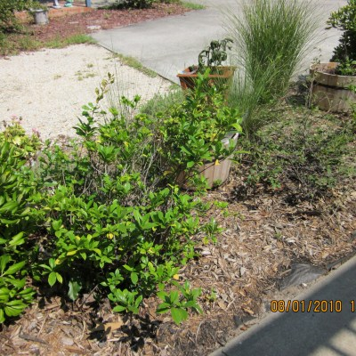 I didn't know I had a yard.  Thought I had a lot of rocks and sand!  Then I went to work……