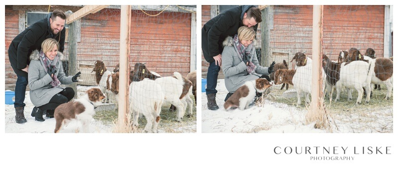 Trevor & Nicole Engagement - Courtney Liske Photography - Regina Wedding Photographer - Winter Farm Engagement