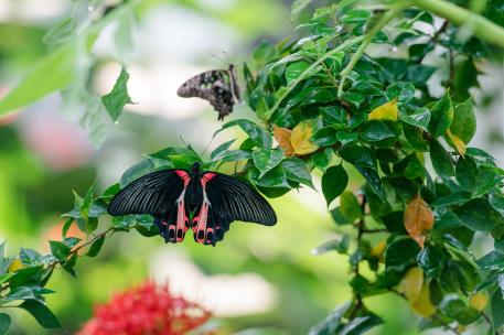 Butterfly and floral exhibit at the zoo