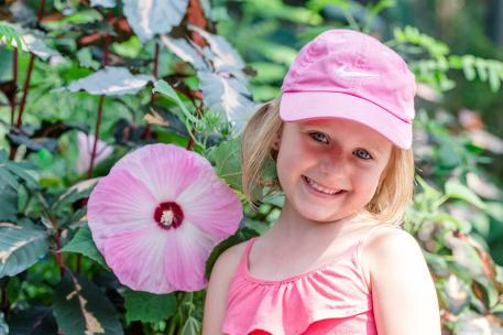 Hibiscus plants the size of dinner plates