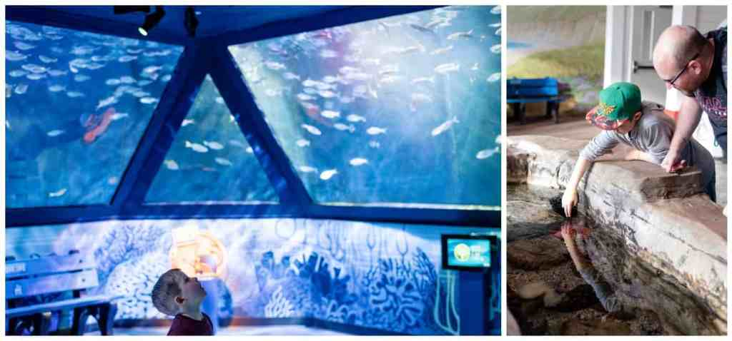 Regina Wedding Photography - Legoland California - Liske Family Travels - Legoland - Sea Life Aquarium