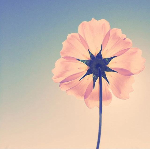 lefoxvintage flower