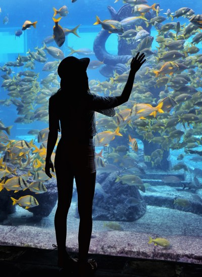 First Timer's Guide to Atlantis Resort