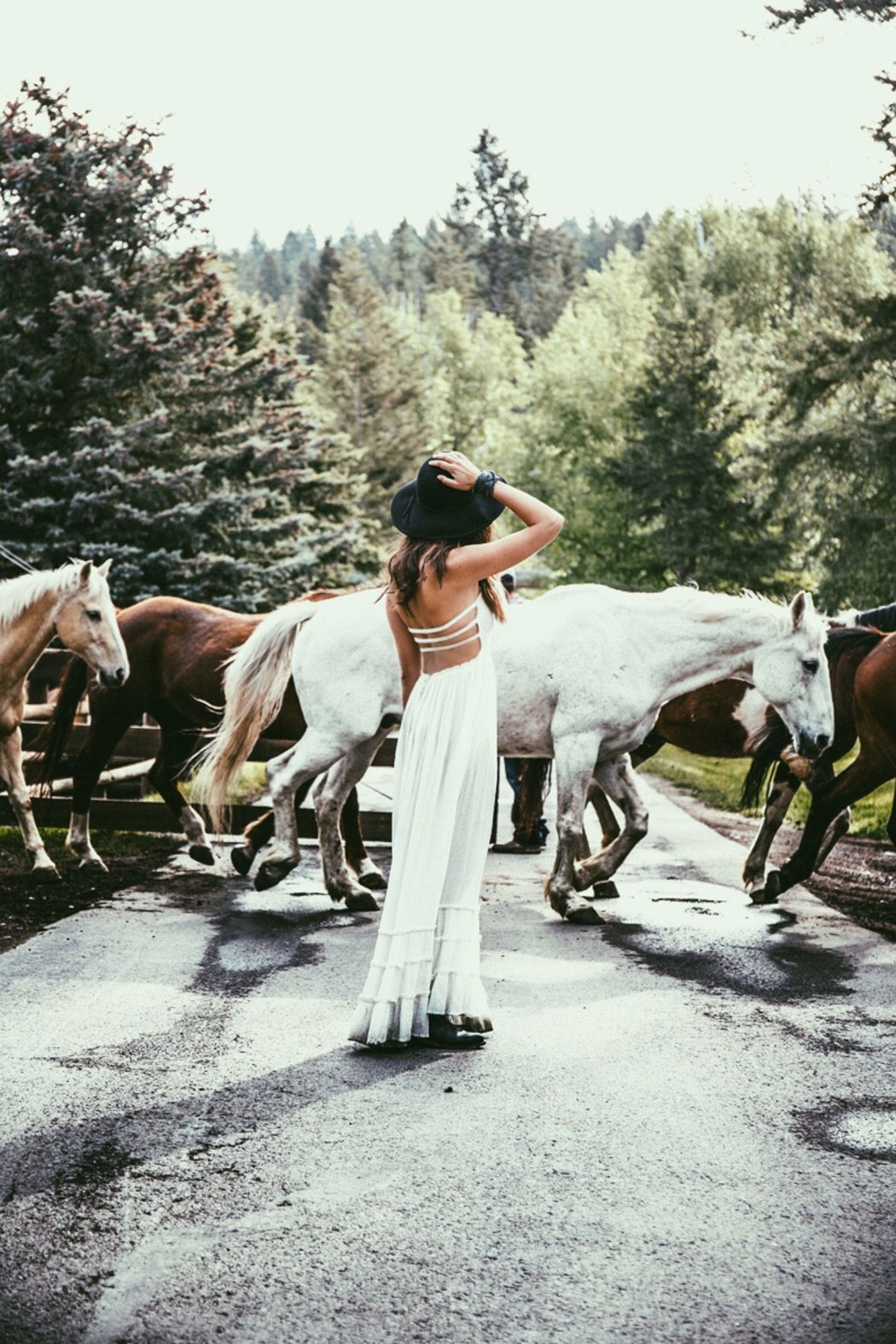 Montana-horses-Courtney-Scott-Travel-Blogger