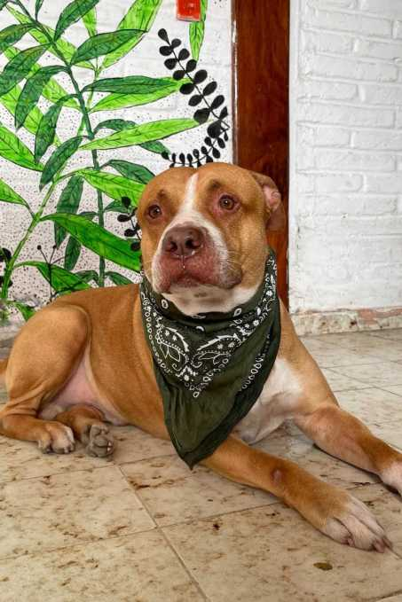 El Sunset Hostel dog, Vikingo