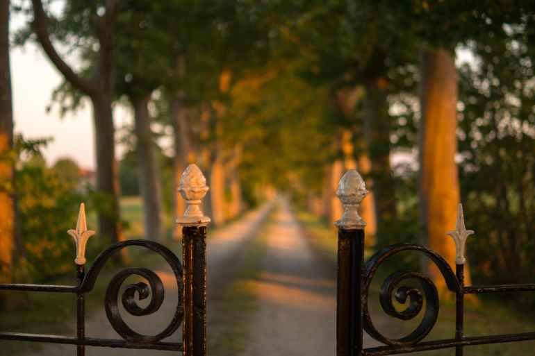 pathway between green trees brown steel gate during daytime