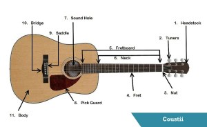 Guitar's Anatomy: Parts of an Acoustic Guitar  Coustii