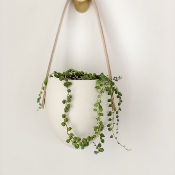 wall planter with string of pearls plant