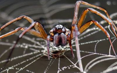 Bug Fact: There are around 4,000 species of spiders.