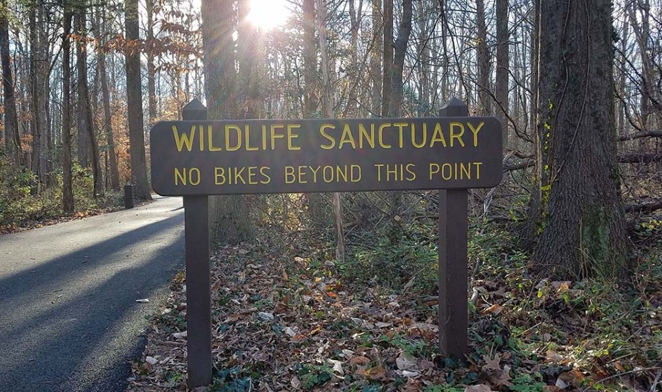 Wooden sign at Huntley Meadows that reads Wildlife Sanctuary, No Bikes Beyond This Point